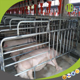 High-Efficiency 현대 돼지 농장 이용된 자동적인 공급 시스템