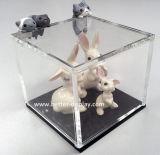 주문 투명한 플렉시 유리 상자