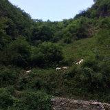 Rete fissa d'acciaio del cavallo, rete fissa del Corral, rete fissa del bestiame