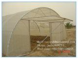 مضادّة حشية شبكة بيضاء ذبابة حشية شبكة شبكة دفيئة لأنّ زراعة