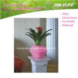 Design de moda Pote de flores colorido