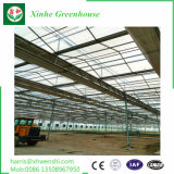 Groenten/Tuin/Bloemen/het Groene Huis van de Plastic Film van het Landbouwbedrijf