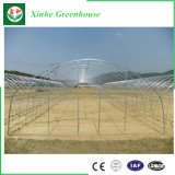 다중 경간 필름 온실 판매를 위한 상업적인 농업 온실