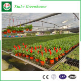 Invernadero de la película del Po del Multi-Palmo para Growing de flor