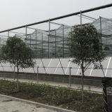 최신 판매 상업적인 농업 유리제 온실