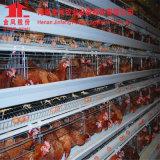 مخزون تصميم طبقة بيضة دجاجة قفص (عمليّة بيع حارّ)