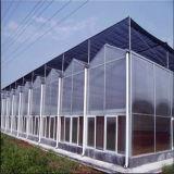 Горячие продажи на заводе питания большой лист ПК Multi-Span сельскохозяйственных выбросов парниковых газов с высоким качеством