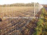 Sailin galvanisierte örtlich festgelegten Knoten-Vieh-/Rotwild-/Schaf-Bauernhof-Zaun