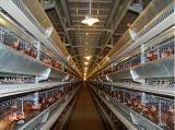 Exploração avícola Prefab da casa de galinha do edifício chinês da construção de aço