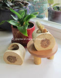 Kundenspezifischer kleiner natürlicher hölzerner Blumen-Potenziometer-Pflanzer-Potenziometer für Succulent