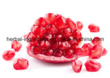 Выдержка Granatum Punica, P. e корпуса Pomegranate, Punica Granatum l