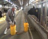 Le bétail effraye le système de pompe de bétail
