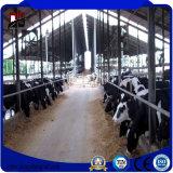 El cultivo de acero modificado para requisitos particulares del ganado de los edificios del metal vertió