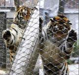 Zoo de la corde en acier inoxydable Mesh Fence/ Ss Flex mesh tissé