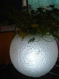 Загорается Flower Pot (RBLV-0901)