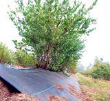 Черная циновка управлением Weed цвета сплетенная PP для земледелия