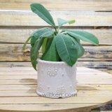 Hot-Sale Magnésia simples Flower Pot para decoração de casa e jardim