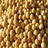 工場供給の有機性大豆のイソフラボンの粉の利点