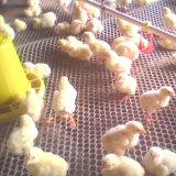 Acoplamiento de alambre plástico del pollo caliente de la venta (fabricante)