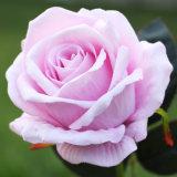 Fleur artificielle bon marché de faux en plastique de couleur rose unique mélange fleurs roses rouges