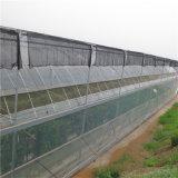 溝によって接続される温室Hydroponic成長するシステムプラスチック温室