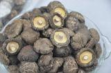 Champignon sec de collecte neuve, légumes de Xianggu Juncaoshii-Takee
