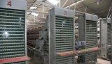 een systeem van de Kooi van de Kip van de Laag van het Frame (ei) voor het Landbouwbedrijf van het Gevogelte