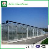 Überspannungs-Glasgewächshaus der Blumen-Frucht-Gemüse-Zucht-Muti mit Qualität