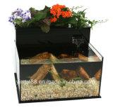 Superqualitätsacrylfisch-Becken für Verkauf