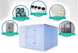 Cella frigorifera commerciale di conservazione frigorifera del ristorante, stanza del congelatore