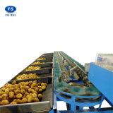 Limpieza de naranja, la máquina de depilación con cera, fruta, la clasificación automática de la máquina nueva máquina