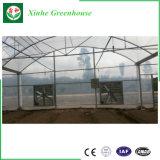 다중 경간 농업 플레스틱 필름 야채 온실