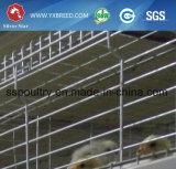 Cage de poule de la volaille pour la vente à chaud