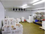 Painel Sanwich PU Sala Fria frigorífico/congelador Blast