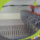 Système alimentant automatique à chaînes pour des porcs