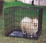 Gabbia dell'animale domestico, gabbia di uccello del gatto del cane, gabbia del cane di serie dell'oro, gabbia del coniglio, gabbia di Parrat