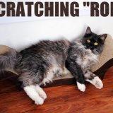 Heiße Verkauf Persönlichkeit Haustier Katze Spielzeug Lovely Katze Kratzer Board