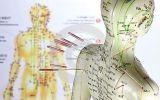 Akupunktur-Modell für medizinische Ausbildung