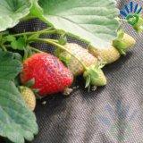 9GSM, 17GSM, 18GSM, 20GSM avec la couverture non-tissée résistante UV de fruit
