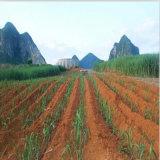 Tuyau d'irrigation anti-poussière en plastique agricole PE