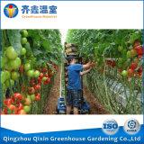 Estufa da película de China com a estufa do vegetal do sistema refrigerando