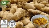 Extracto de jengibre de alta calidad, Gingerols 1% al 20% Test por HPLC; Tratamiento de la osteoartritis