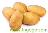 Neue Getreide-Export-gute Qualitätschinesische frische Kartoffel