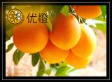 Het Oranje (GEMEENSCHAPPELIJKE) Fruit van het Fruit van het Voedsel van Kerstmis