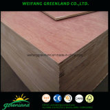 Red Meranti Madera contrachapada del álamo con Core / madera dura Coer y Combi Core