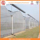 Agricultura/estufas comerciais do túnel da película de polietileno para a morango/Rosa