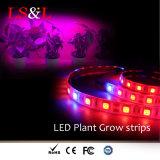 luz de tira do diodo emissor de luz 5050SMD para iluminação Growing da planta