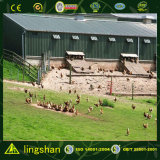 造りのプレハブの鉄骨フレームの層のニワトリ小屋は絶食する