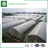 Serre van de Tunnel van de Plastic Film van de Spanwijdte van lage Kosten de Enige Landbouw