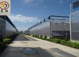 A China a folha de PC/gases com efeito de policarbonato para tomate/frutas